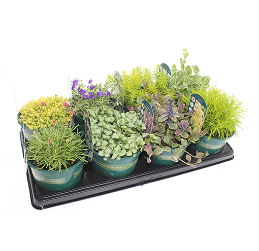 foliage-collection-alpines