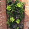 Wonderwall starter kit size living wall on brick wall