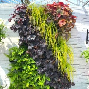 1m2 Wonderwall Kit with Hardy Plants