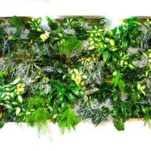 2m2 Indoor Houseplant Biophilic Living Wall