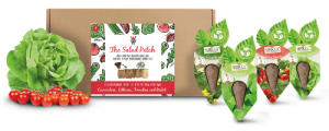 Salad Patch SeedCell Kit Box with Salad