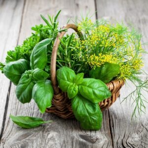 SeedCell Basket of Herbs